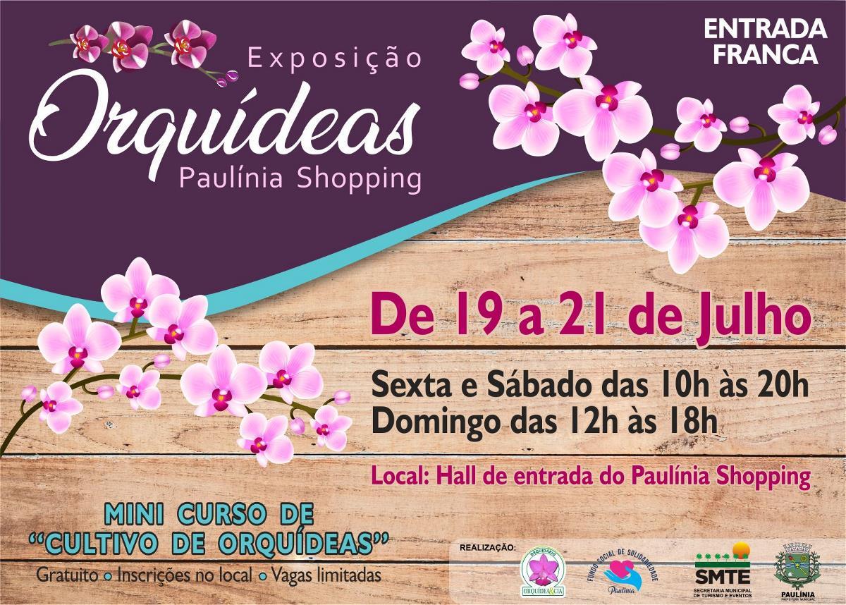 <i>Paulínia terá exposição de orquídeas neste final de semana</i>