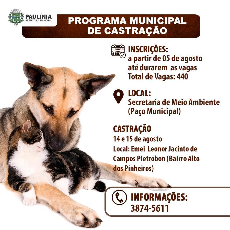 Prefeitura abre nesta quinta-feira, 05,  inscrições para o Programa de Castração