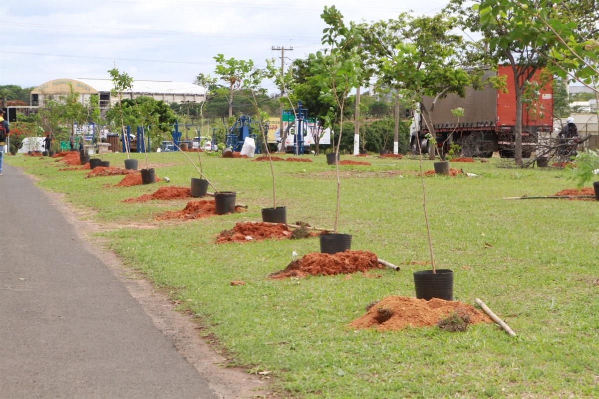 Prefeitura planta 150 mudas na Avenida João Aranha
